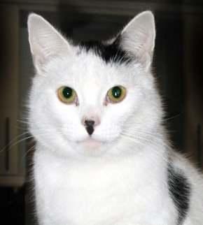hitler_cats_10
