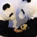 Maman Panda, Papa Panda et Bébé Panda